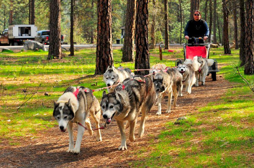 Dog Training Bellerive